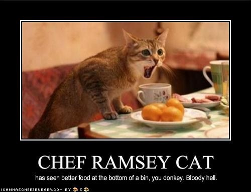 Chef Ramsey Cat has seen better food at the bottom of a bin, you donkey! Bloody hell!!