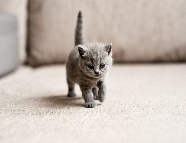 Cuidar A Gatito Recién Nacido Formulas Limpieza Y Mas Gatitos Recién Nacidos Perros Recien Nacidos Animales Recién Nacidos