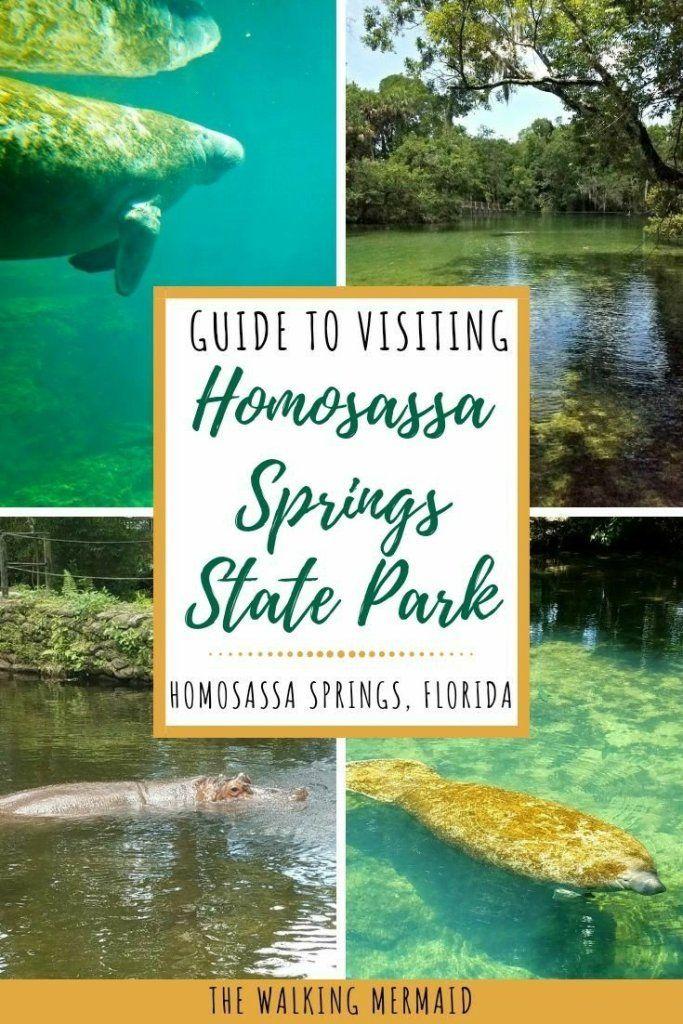 Homosassa Springs State Park Homosassa Springs State Parks Outdoor Travel
