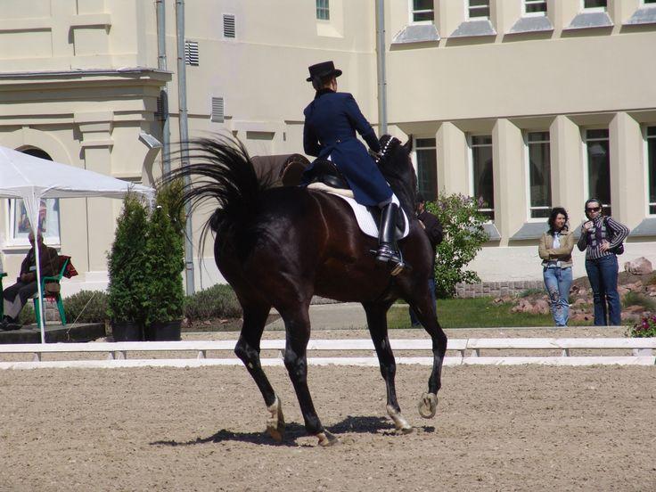 競争 回転 ギャロップ イメージ 在庫 スポーツ 乗馬