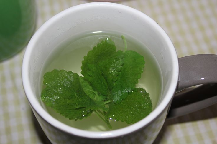 Lemon balm tea. From the garden.