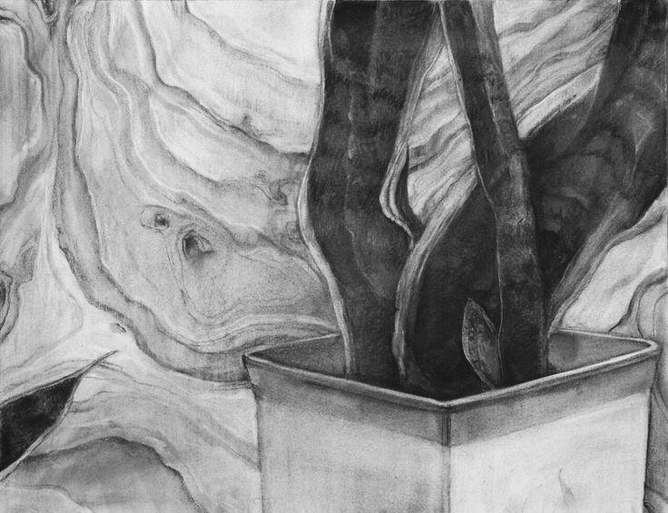 2013/charcoal drawing/monochrome/a foliage plant