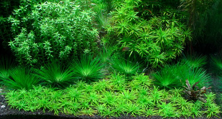 Live aquarium plants http://www.ebay.co.uk/itm/120-Live-10-Species-clumps-Aquarium-Aquatic-Tropical-Fish-Plants-beginner-/371180624392?hash=item566c16da08
