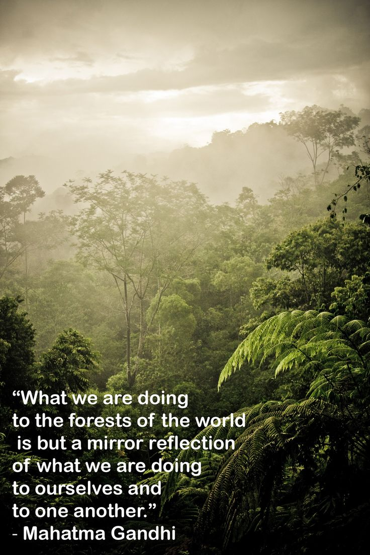 """""""What we are doing to the forests of the world is but a mirror reflection of what we are doing to ourselves and to one another."""" ― Mahatma Gandhi    Find out more about rainforests: http://grnr.in/187EmxX"""