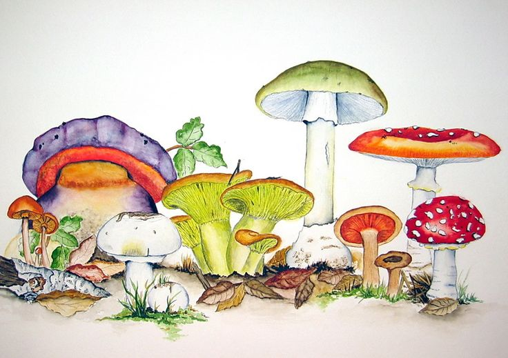 Mushrooms - Pilze Watercolor by Maria Inhoven