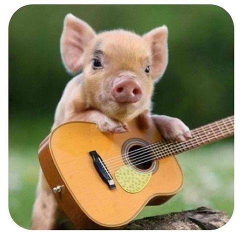 ♥ musical piglet