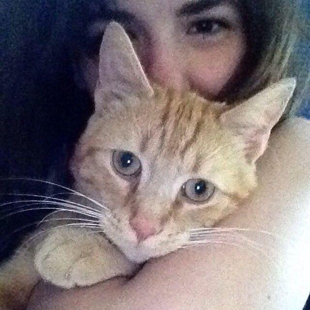 #Katze #Tiere