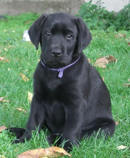Can't wait till one of these little cuties is mine<3