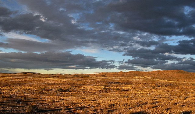 """""""Dawn in the Veld""""  On the farm """"Zoetvlei"""" in the Great Karoo, about 25 kilometers South West of Beaufort West (South Africa)  Photo by Penny East"""