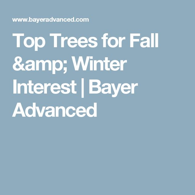 Top Trees for Fall & Winter Interest | Bayer Advanced