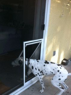 Love the idea of a pet door installed in the screen rather than the door itself, or one of those inserts. Allows dogs access to outside when you want, and intruders out while you're away. :)
