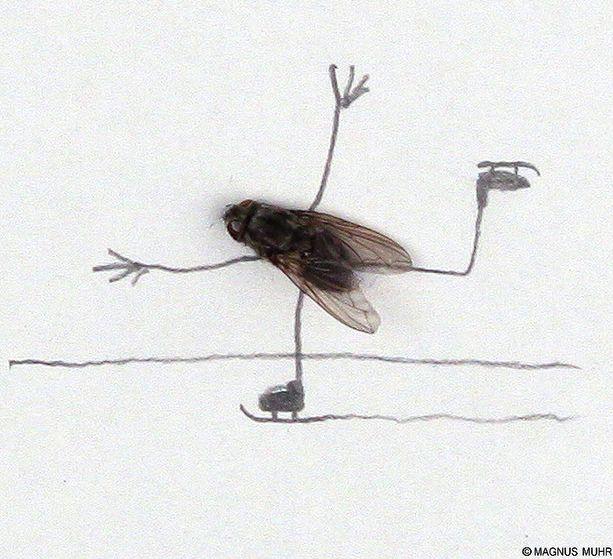 doodles with dead flies