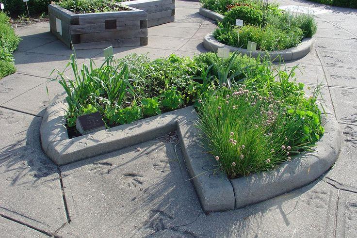 Outdoor Garden - 4-H Garden MSU - Pizza garden