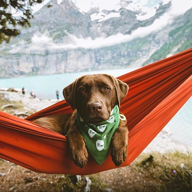 Picture perfect pupper. #campingwithdogs @dogswiss