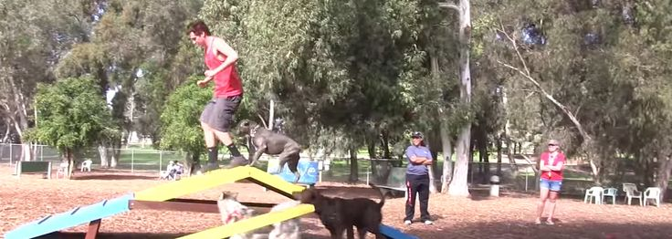 These Guys Went To A Dog Park With Squeaky Shoes And This Happened