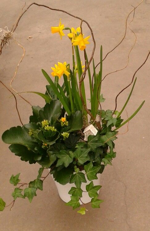 Regal Florist & Garden Centre in Virgil, ON