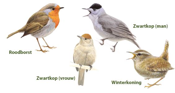 Vogelbescherming Nederland | Herkent u de vogel?