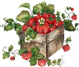 Résultats de recherche d'images pour «fraise dessin audace»