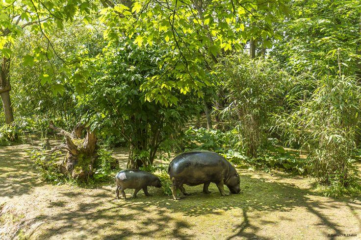 Mère et fille hippopotame pygmée dans leur parc arboré.