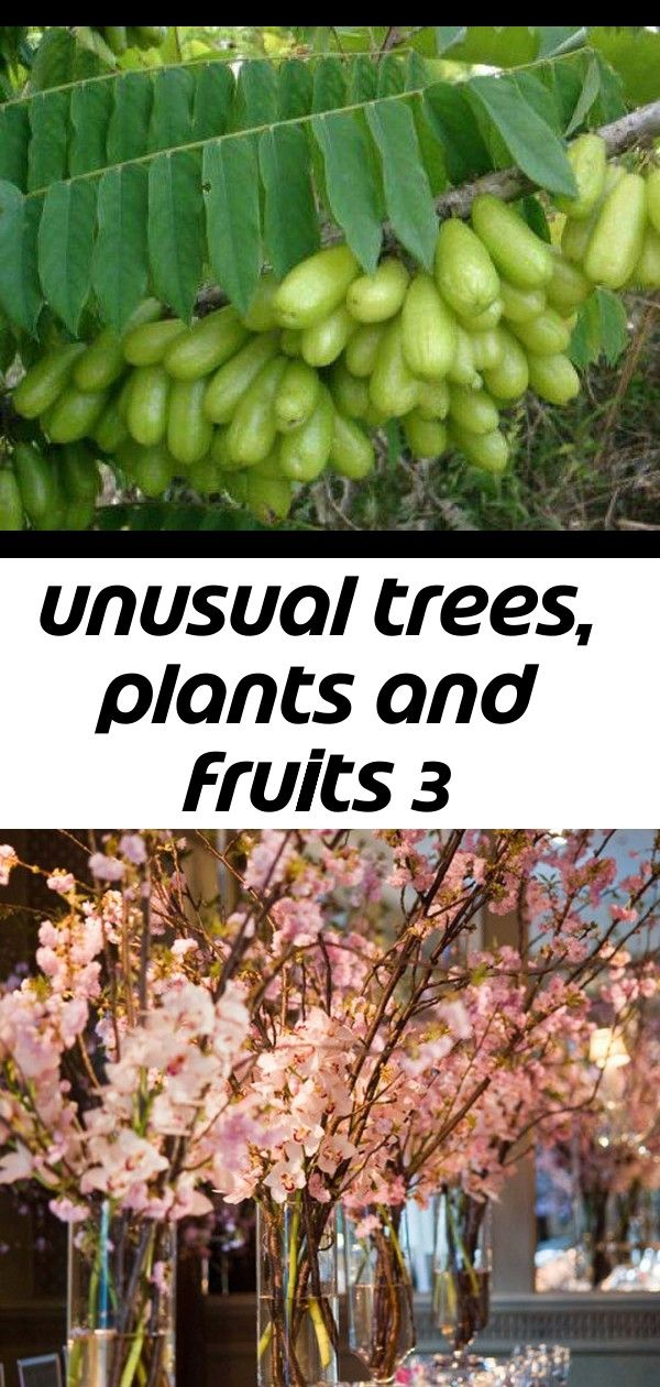 Unusual Trees Plants And Fruits 3 Trees To Plant Plants Fruit