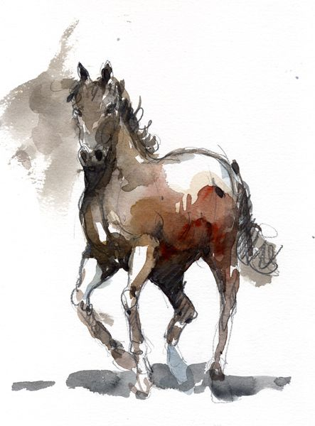Horse Watercolor Painting – Horses For Sale -Video Horse