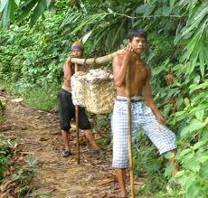 rubberplantage