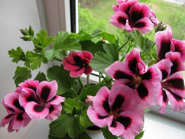 «Комнатные растения и не только...» | Записи в рубрике «Комнатные растения и не только...» | Дневник Der_Engel678 : LiveInternet - Российский Сервис Онлайн-Дневников