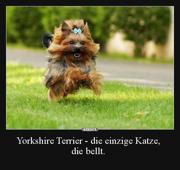 Hier bei uns von EBENBLATT gibt's die coolsten und lustigsten Katzen Shirts für Katzenliebhaber, schau vorbei! #katzen #katze #cat #cats #herrchen