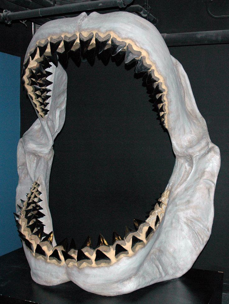 Best 25+ Megalodon shark ideas on Pinterest | Megalodons, Pictures of megalodon and Megalodon ...