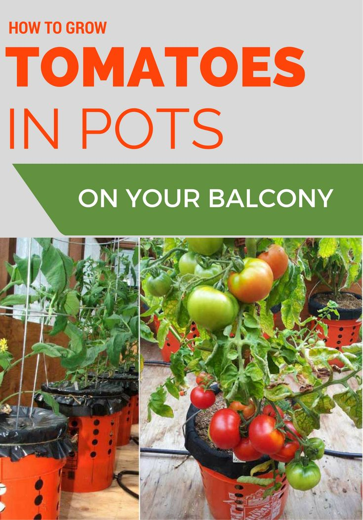 228 Best Garden Tricks Images On Pinterest Garden Pests