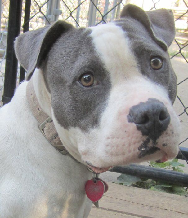 Pin on Adoptable Dogs, Cats & Horses