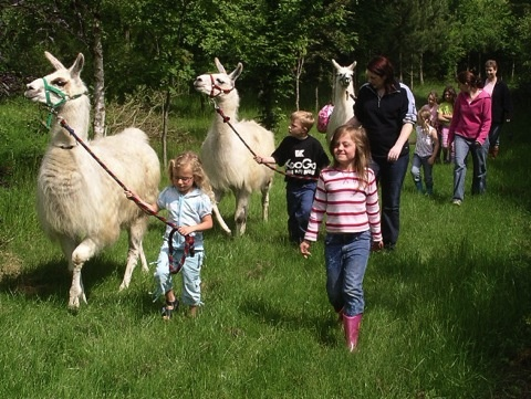 go on a llama trek