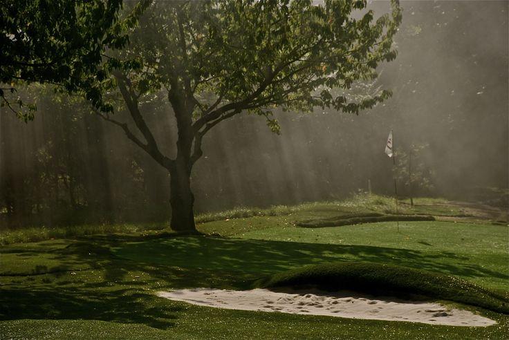 Jaworowy Dwór - pole golfowe i zabytek przyrody - Dąb http://artimperium.pl/wiadomosci/pokaz/105,w-historycznym-jaworowym-dworze#.Ur62VfTuKSo