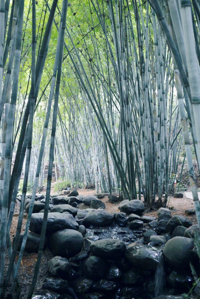 Changsha | China | chinese | bamboo forest | Nanjiao park