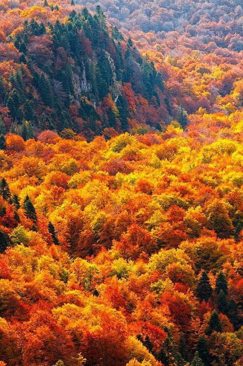 The autumn forests of Steneto reserve in Bulgaria