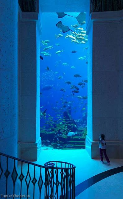 I would like a giant salt-water fish tank in my house. Or to just live under the sea.