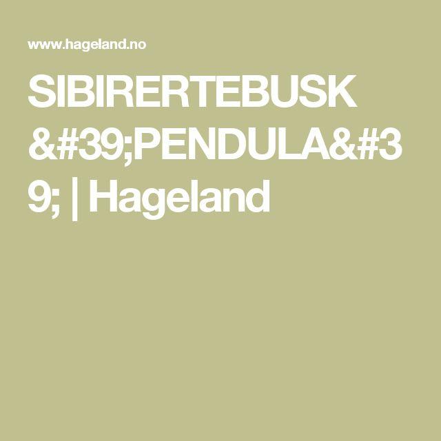 SIBIRERTEBUSK 'PENDULA' | Hageland
