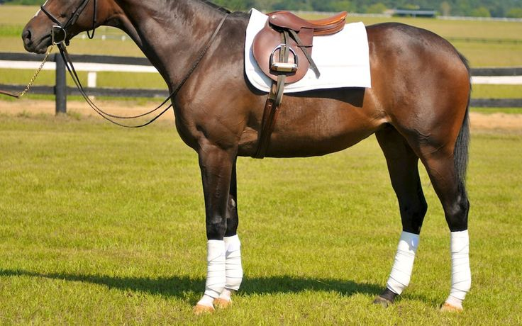 What is a polo wrap? when should you use a polo wrap? Find out more about Polo Wraps at Noble Life!