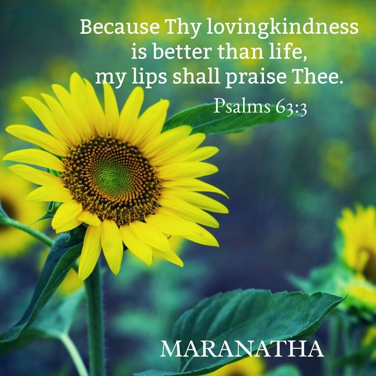 #Psalms 63:1-11 (KJV) O God, thou art my God; early will I seek thee: my soul thirsteth for thee, my flesh longeth for thee in a dry and thirsty land, where no water is; To see thy power and thy glory, so as I have seen thee in the sanctuary. Because thy lovingkindness is better than life, my lips shall praise thee. Thus will I bless thee while I live: I will lift up my hands in thy name. My soul shall be satisfied as with marrow and fatness; and my mouth shall praise thee with joyful…