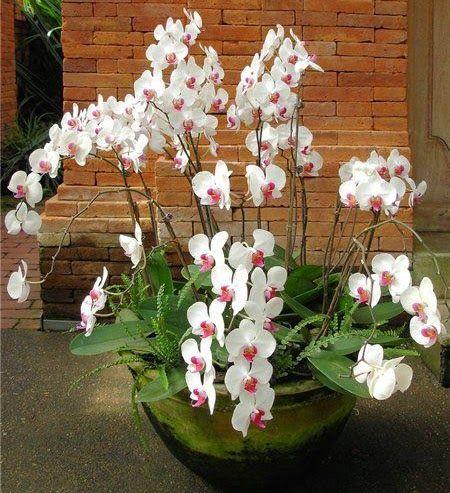 Орхидеи. Как ухаживать за орхидеями в домашних условиях http://www.myflora.com.ua/index.php?option=com_content&task=view&id=803&Itemid=116