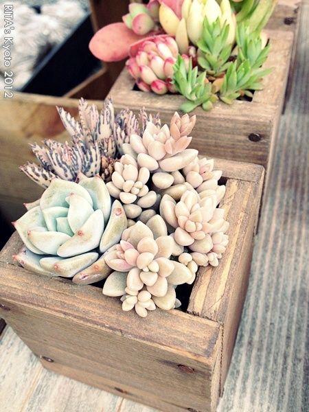 Um jardim para cuidar: Adoro caixas e vasos de madeira..