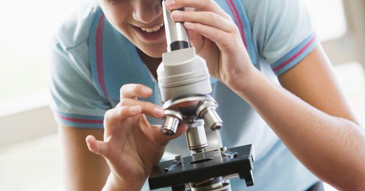 ¿Qué objetos en general verías con un microscopio óptico compuesto?. Los primeros microscopios eran poco más que las lupas, hasta se utilizaban lentes múltiples. Pronto se comprobó que con dos juegos de lentes se creaba un microscopio compuesto, uno podía ver objetos muy pequeños, de 0,1 micrones de tamaño. En el siglo XXI, los microscopios compuestos se utilizan todavía para estudiar y aprender. El microscopio ...