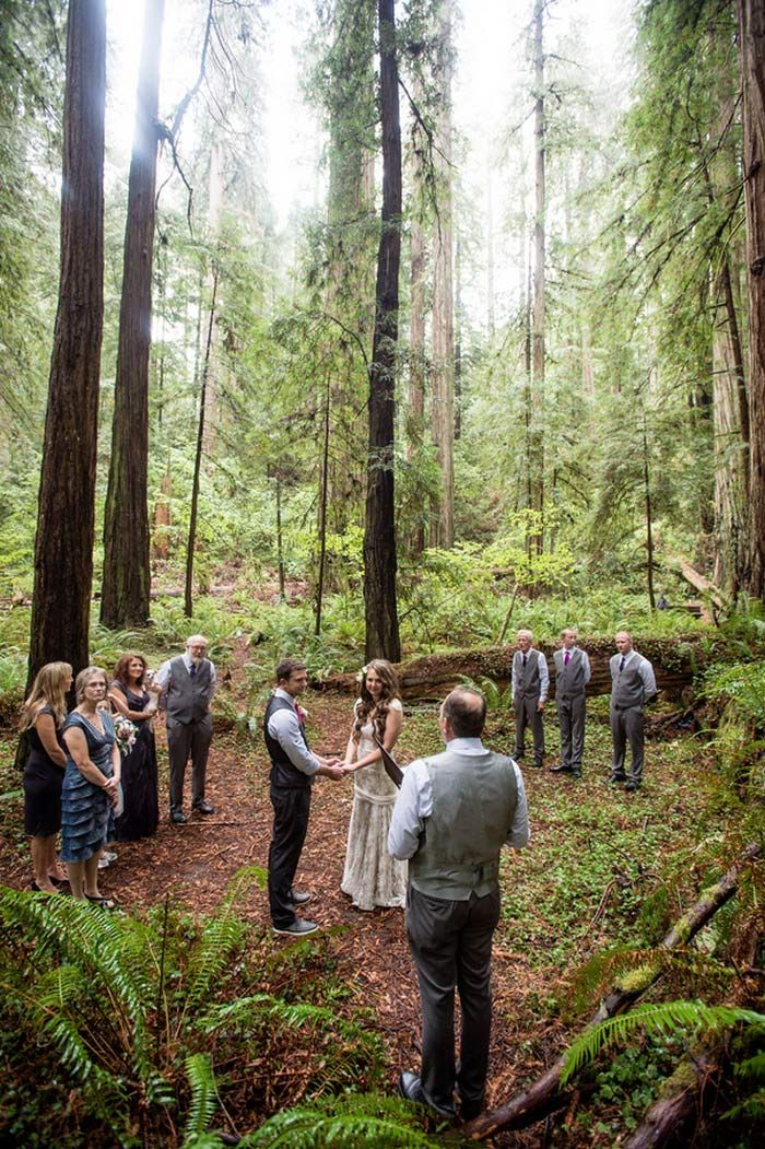Cecilia And Craigs California Redwood Forest Wedding