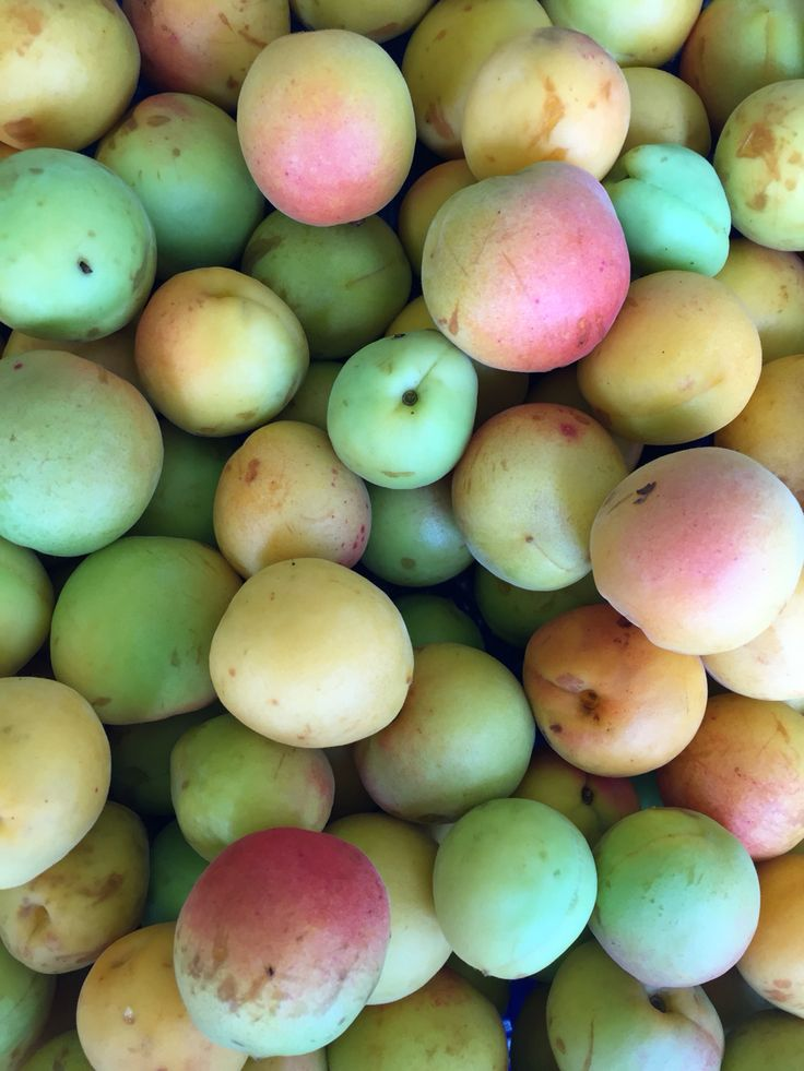 my garden organic farming japanese apricot