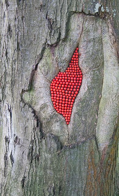 Scarlet Oak Rowan Berries by JRT Pickle