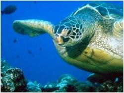 Sodwana Bay Turtle