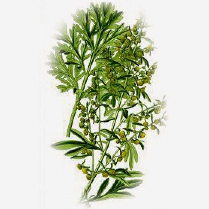 Το e - περιοδικό μας: Το φυτό Αρτεμισία, στη μάχη κατά του καρκίνου