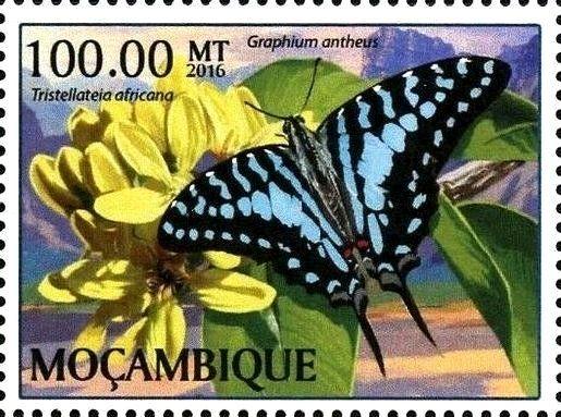 Stamp: Graphium antheus (Mozambique) (Butterflies) Col:MZ 2017-01/2