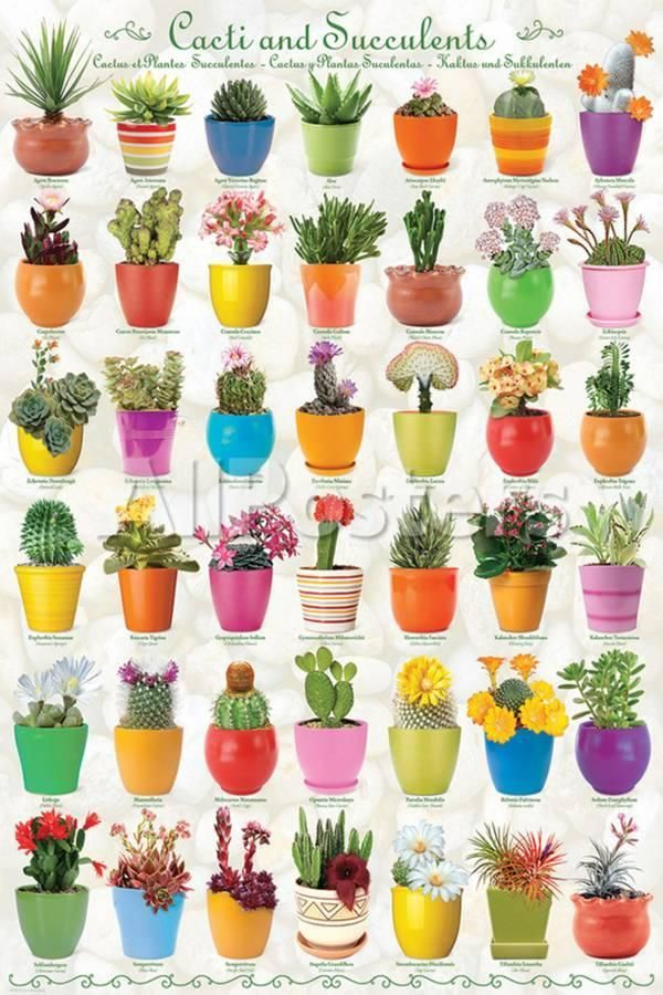 Cactus Succulents Collage Posters Allposters Com Cacti And Succulents Cactus And Succulents Cactus Flower