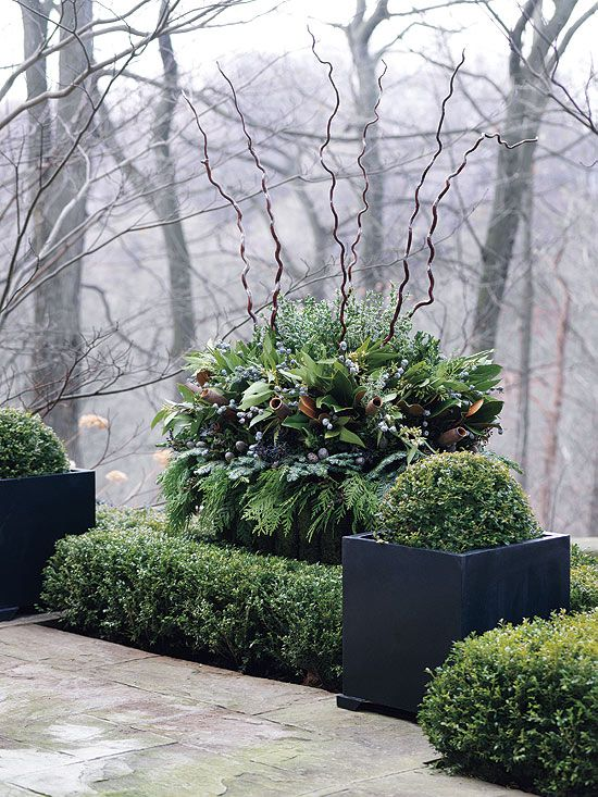 winter-pots-sumptuous.jpg...yard gleanings and corkscrew willow!